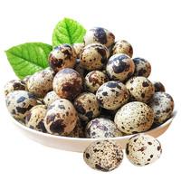 桃小淘 新鲜生鹌鹑蛋 50枚