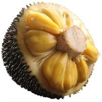 六井 海南菠萝蜜  23-26斤