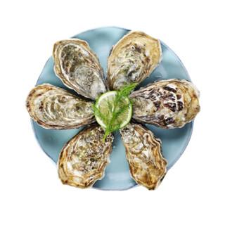 渔传播 净水鲜活生蚝 5斤装 1份盒装  牡蛎 海蛎子  海鲜水产 烧烤食材 赠蚝刀