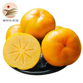 云南脆柿甜柿子脆甜硬柿子新鲜应季水果 2.5斤
