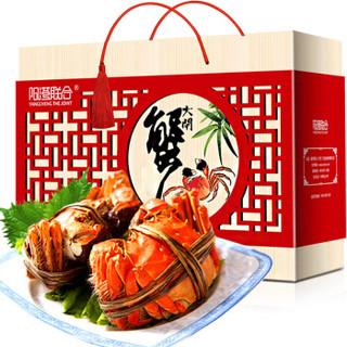 京东PLUS会员 : 阳澄联合 现货大闸蟹 公3-3.5两 母2-2.5两 共7对 14只+澳洲谷饲原切牛排1.2kg(有赠品)