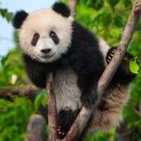 错峰游,买一送一!成都-峨眉山+乐山+都江堰+熊猫乐园+黄龙溪古镇3天2晚游