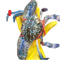 ERYU 耳鱼 野生梭子蟹