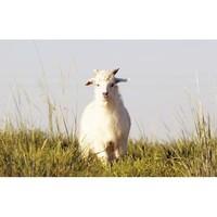 羊肉百科+拓展知识 总结