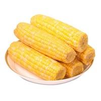 甘肃 新鲜水果玉米 带箱10斤