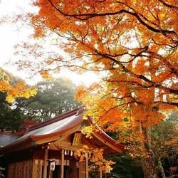 枫狩祭!全国多地-日本福冈+熊本+鹿儿岛7天6晚自由行