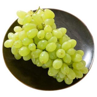 京觅 新疆无籽露葡萄 精品  2kg