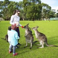 7城直飛,2地進出!全國多地-澳大利亞悉尼+墨爾本8天6晚自由行