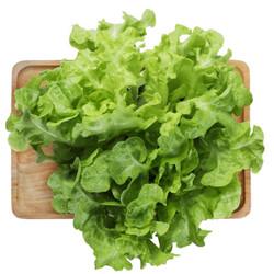 京觅优选 橡叶生菜(绿) 沙拉 孕产 宝宝辅食 火锅食材 约200g 京东植物工厂水培蔬菜