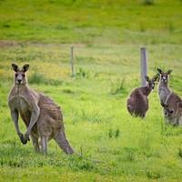 飛往南半球避寒!含元旦!全國多地-澳大利亞悉尼/墨爾本