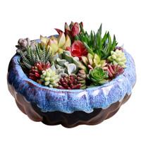 多肉陶瓷花盆大口径植物花盆