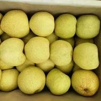 西贝哥 砀山皇冠梨 带箱10斤