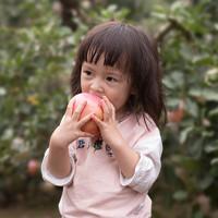 陕西红富士苹果10斤脆甜