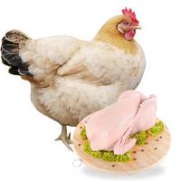 农家散养2年老母鸡净重1kg/只 1只装 *2件