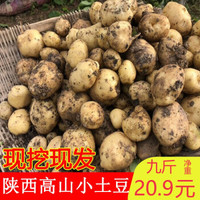 陕西高山小土豆 4.5kg装