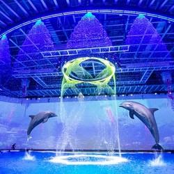 上海海昌海洋公园 成人票