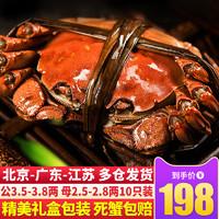 大闸蟹公3.5-3.8两母2.5-2.8两10只鲜活螃蟹