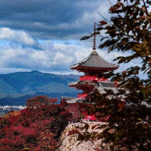 红叶、圣诞、元旦、寒假  上海直飞日本大阪 传统航司机票