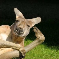 京东11.11 : 全国受理 澳大利亚个人旅游/探亲 三年多次电子签证