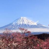 正樱花季,含小长假!日本航空直飞!上海-东京/大阪往返含税机票
