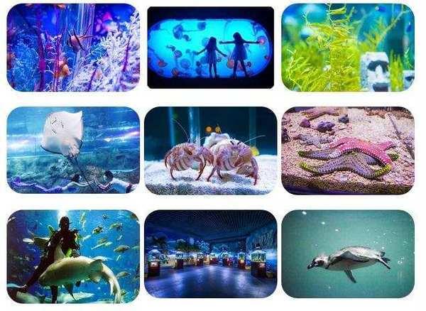 人鲨共舞+海底隧道+企鹅馆!北京太平洋海底世界日场门票 可免费带1儿童