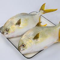 抄作业 : 金鲳鱼 900g 2条*3件+正大 糯米猪肉烧卖 600g+罗非鱼 400g