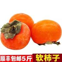 柿子文化 水果小柿子软柿子水果带箱 5斤