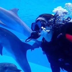 买一送一!三亚海昌 海豚湾DSD深潜体验(全套进口装备+ 鳐鱼浮潜/与海豚同游+体验证书+冲淡)