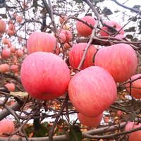 王大枣 红富士苹果 净重9斤 果径75mm-80mm
