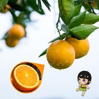 秦觅 湖南麻阳冰糖橙非脐橙 5斤