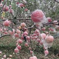 福益馨 陕西红富士丑苹果 10斤带箱 果径80-85mm