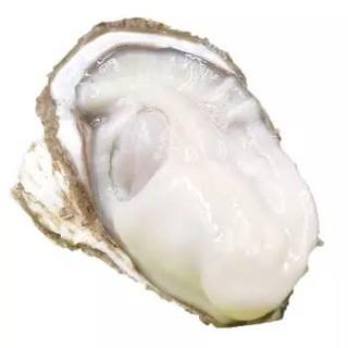 董盈盈 鲜活乳山牡蛎 净重约4.5斤