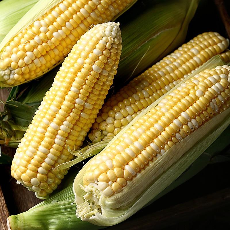 田妹子 水果玉米 10斤