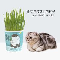 猫酱网红猫草种子猫草杯套装