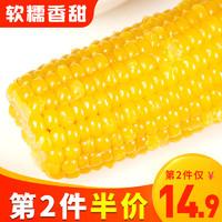 东北糯玉米 新鲜现摘即食黏粘香甜玉米棒 真空包装200g*6袋 包邮
