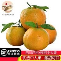 四川芦柑桔子 椪柑中大果 柑橘子水果 柑桔 当季非丑柑不知火 5斤中大果