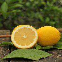 光辉红钻 安岳柠檬 黄柠檬 净果5斤