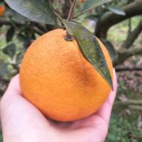 龙烜 四川金堂脐橙 3斤品尝装12颗左右
