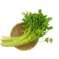 绿鲜知 香芹 小芹菜 约400g 新鲜蔬菜 *31件