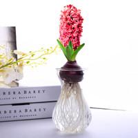 风信子种球水仙花水培花卉荷兰进口套装植物室内办公室桌面盆栽 粉色风信子 水培玻璃瓶套装