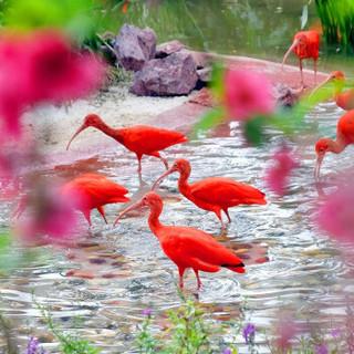 广东广州长隆飞鸟乐园门票长隆旅游度假区 学生票