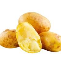 齐玺 承德小土豆 500g*5件 + 新鲜胡萝卜 500g*10件