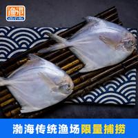 姑苏渔港 白鲳鱼平鱼 300g 冷冻平鱼2条 野生银鲳鱼