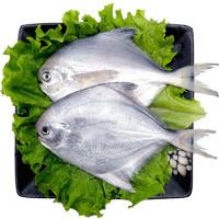 星渔 海捕野生银鲳鱼 1斤 6-7条