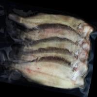 逸知鲜 新品野生海捕比目鱼 450g