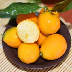 脆皮金桔  小橘子  新鲜京东生鲜 2斤装