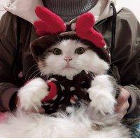 hoopet 华元宠具 猫咪冬季衣服