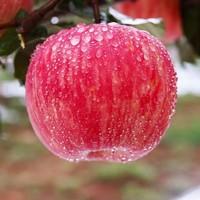 现摘陕西红富士苹果带箱3斤包邮新鲜水果批发当季整箱孕妇苹果