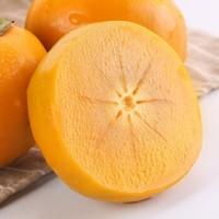 广西桂林恭城脆柿 脆皮硬柿子 5斤