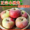 小国光苹果笨果新鲜水果正宗国光苹果瓦房店不打蜡不套袋 5斤包邮